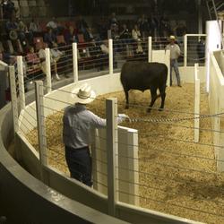 SURVIVOR LV Livestock Ring Scale
